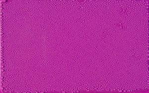 Dokaz da Teslina purpurna ploča ima začuđujuća svojstva